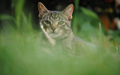 Achtsamkeits-Impuls / Schule dein Bewusstsein im Umgang mit Tieren.
